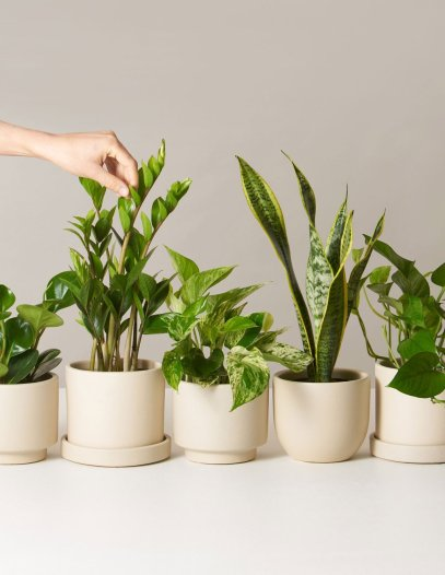 the-sill_low-light-potted-plants-monthly-subscription-box_variant_all_01_1024x.jpg